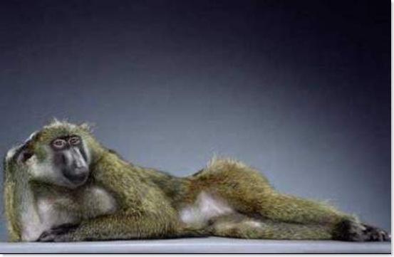 Monos (8)