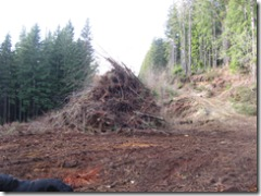 Back Lower Pasture Clearing 009