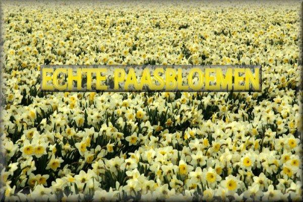 Bloemen voor de Paasdagen