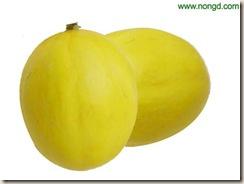elizabethan melon